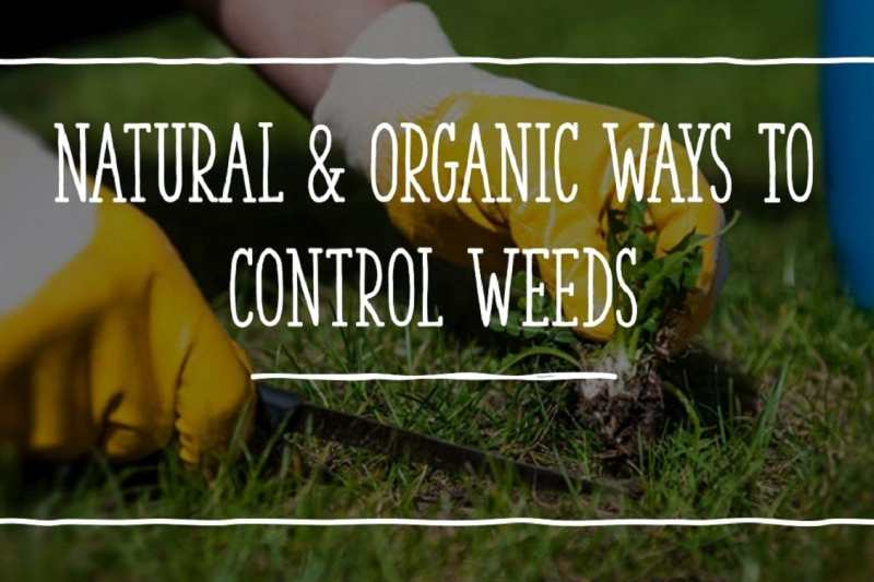 natural way to kill weeds